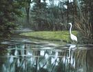 Egret Reflecting   Pattern Packet